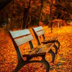 two benches on autumn