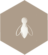 gray bee icon