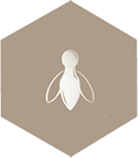 tan bee icon